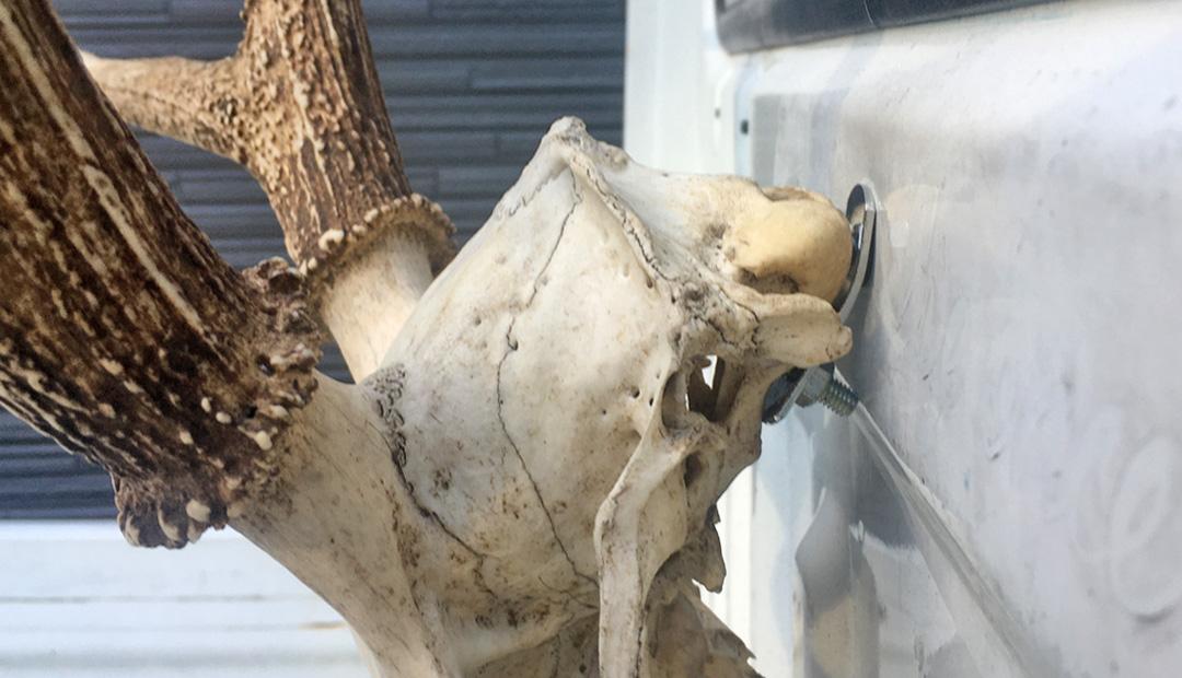 Deer Skull ハンティング・トロフィー 軽トラ スカル 鹿